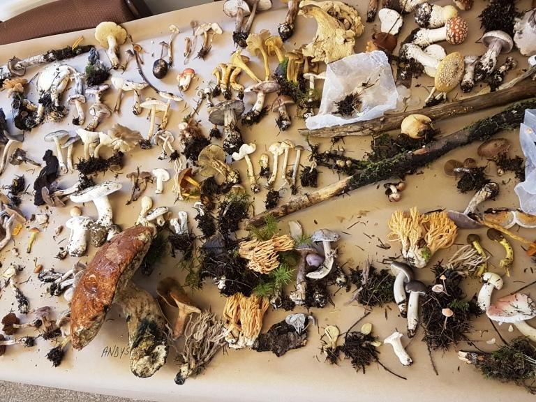 Cowichan foray displayed mushroom 2019 by Kurt Raeder